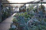 The Greenery Nursery and Garden Shop
